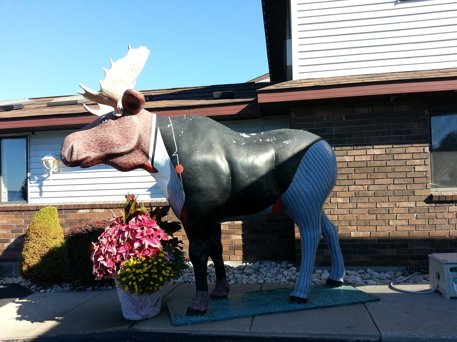 Tuxedo Moose
