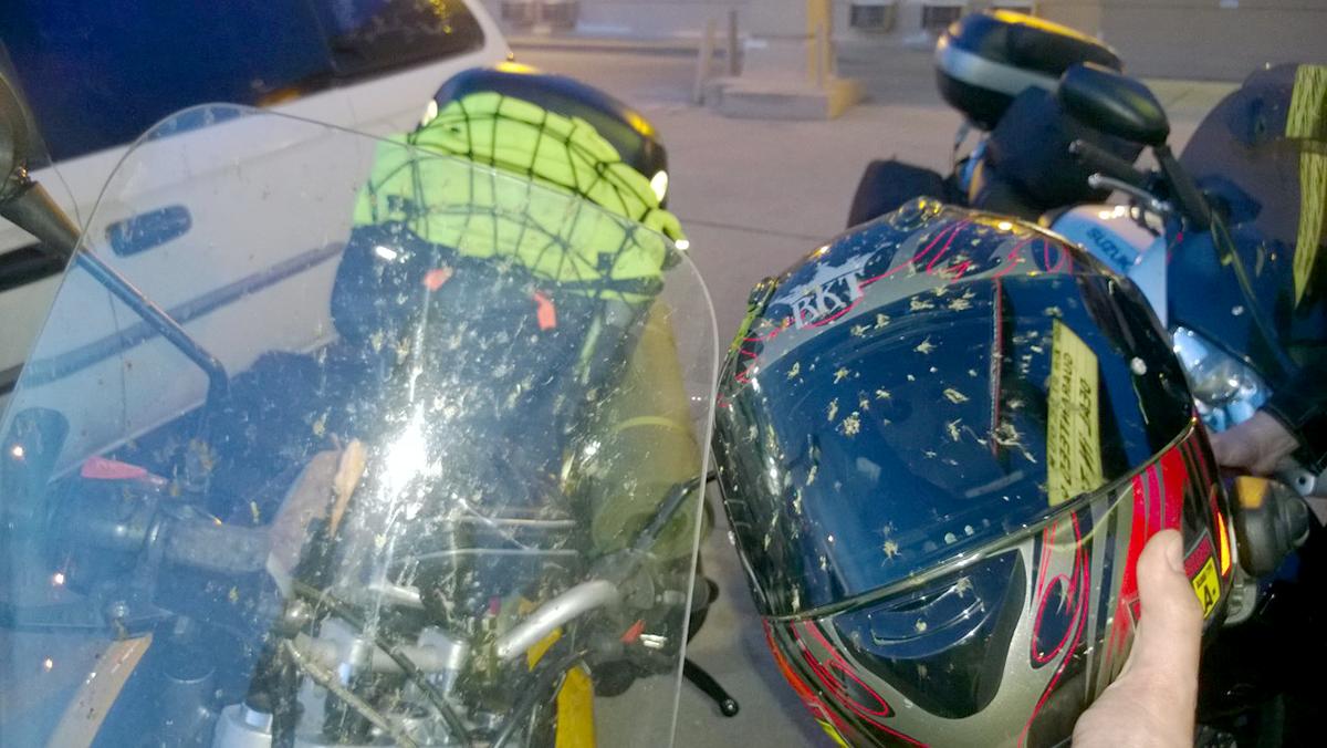 Moto Bugs Travis